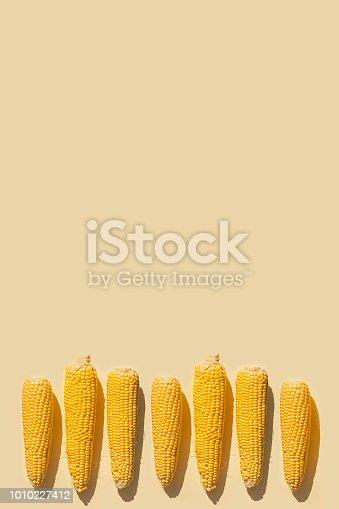 Fresh corn  on yellow background