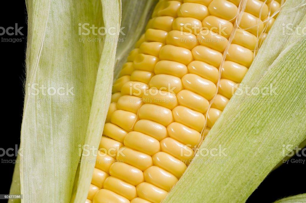 Corn cob royalty-free stock photo