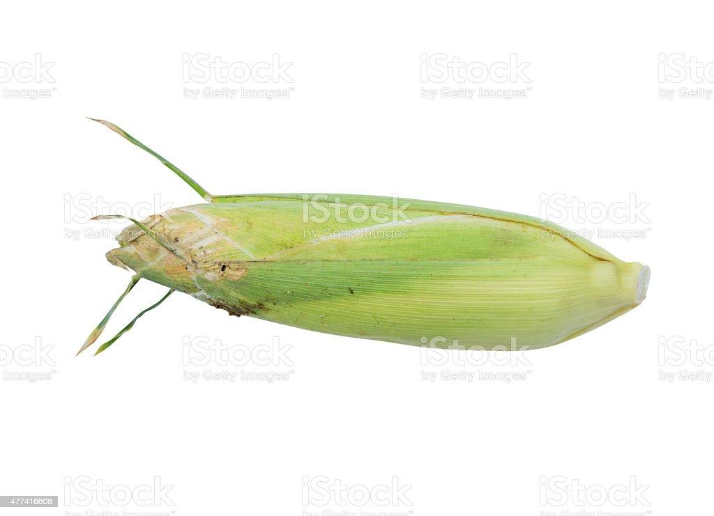 Corn Cobs on White Background stock photo
