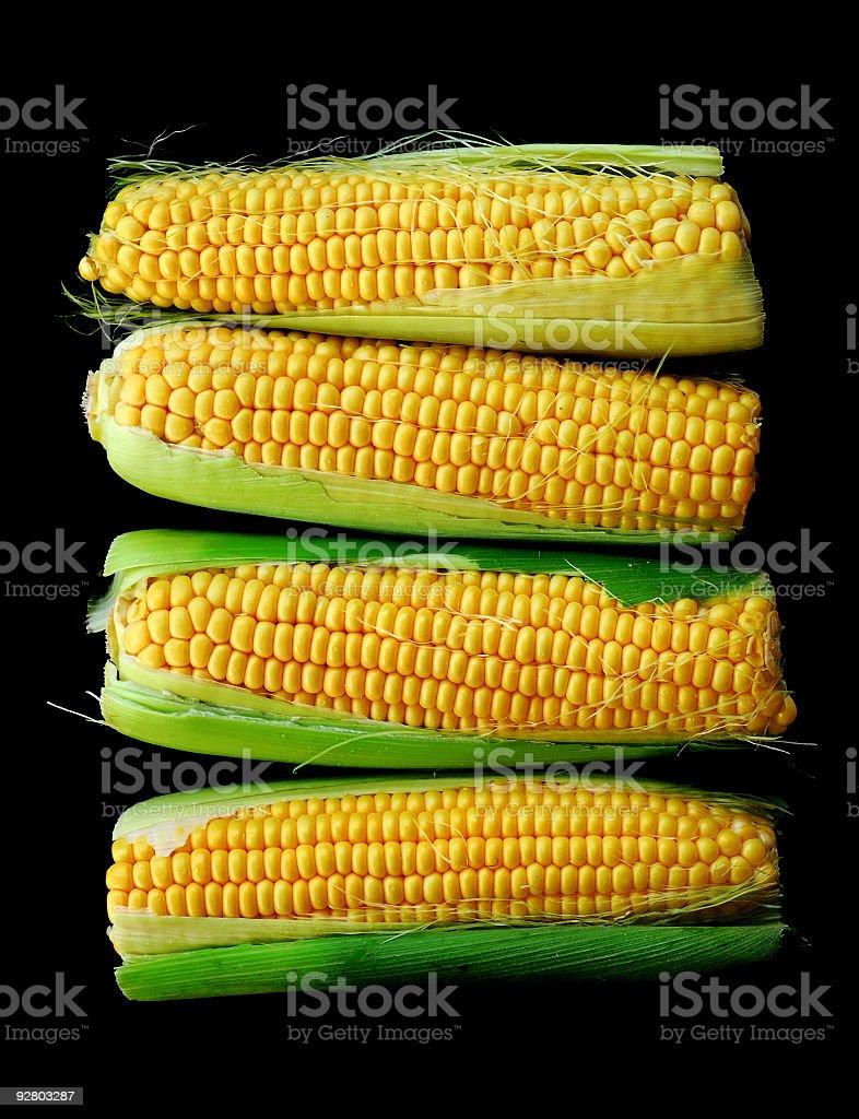 corn cobs royalty-free stock photo