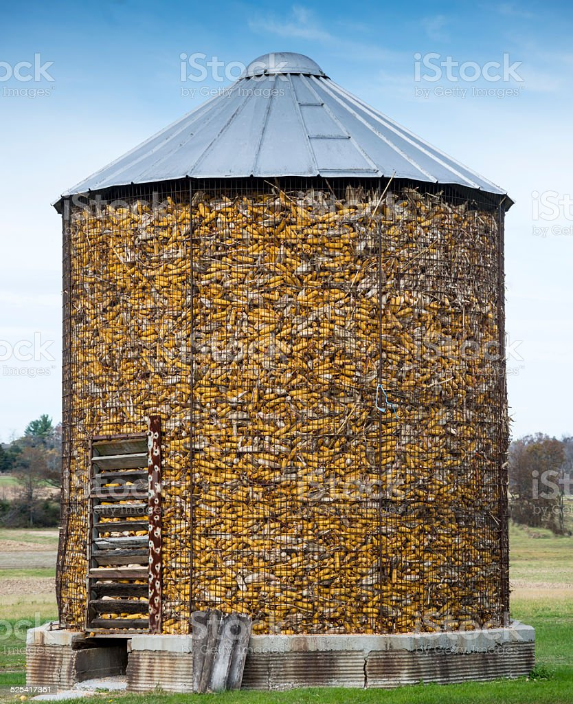 Corn Crib Filled with Harvested Corn on the Cob. stock photo