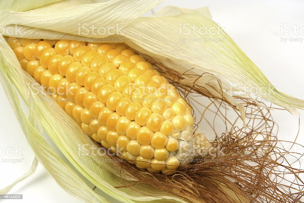 Corn ear royalty-free stock photo