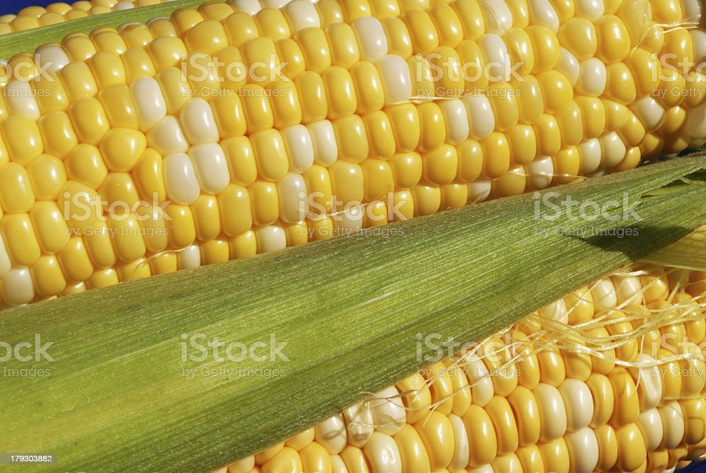 Corn Ears II stock photo