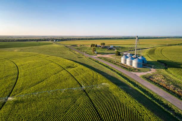 vue aérienne de champ maïs - Photo