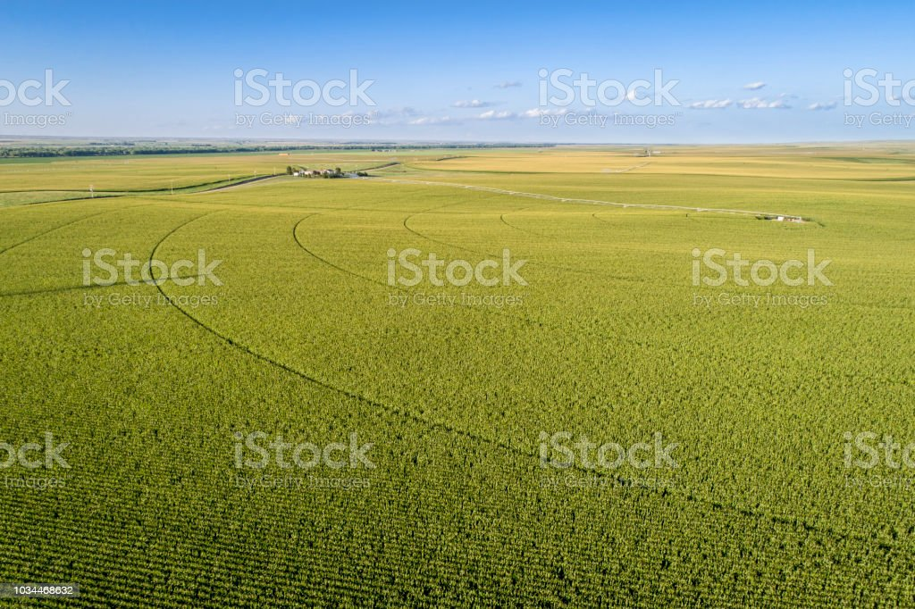 corn field aerial view foto stock royalty-free