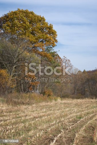 October corn field in stubble after harvest, fall agriculture in Pennsylvania, PA, USA.