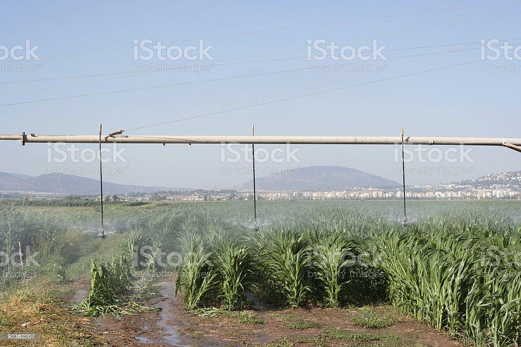 corn field and rainbow royalty-free stock photo
