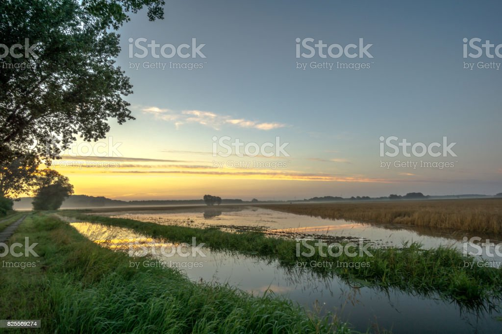 Corn field at sunrise and flood royalty-free stock photo