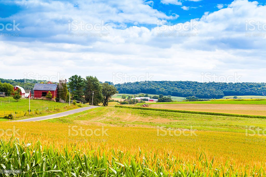 A corn field in the American countryside on a stormy day stock photo
