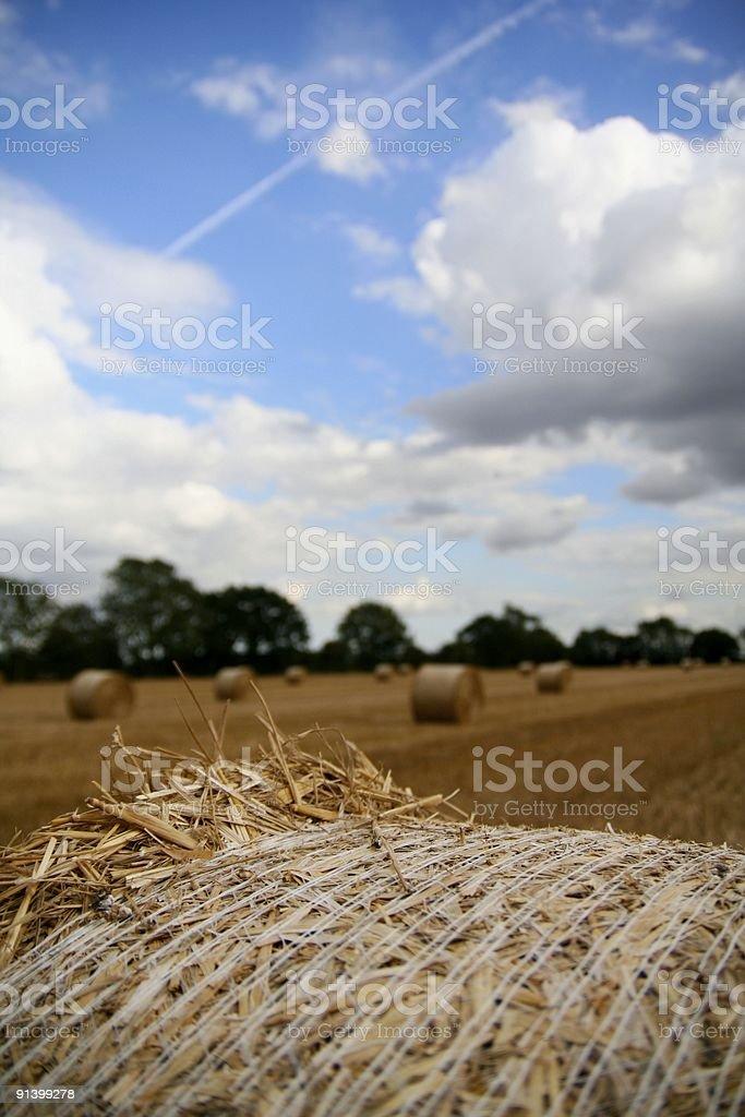 Corn Field... royalty-free stock photo