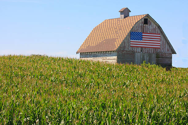 corn, flag paint a rustic picture in rural iowa - us flag stok fotoğraflar ve resimler