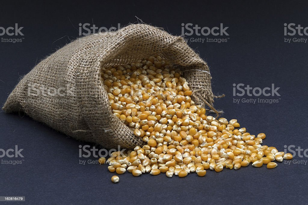 Corn grains in small burlap sack stock photo