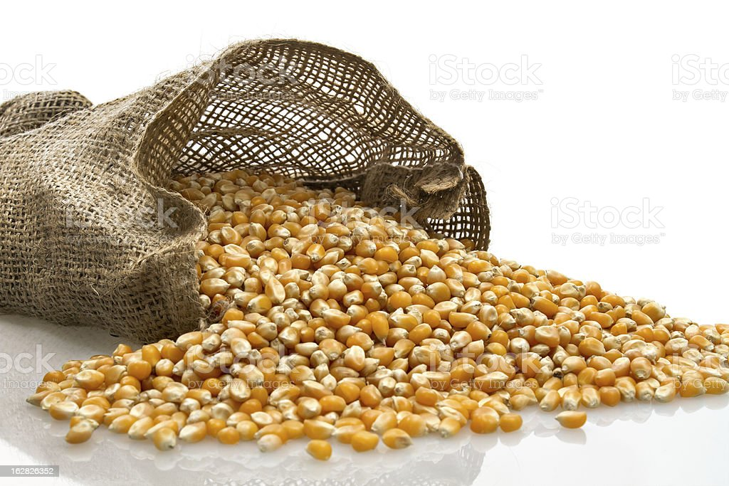 Corn grains in small burlap sack royalty-free stock photo