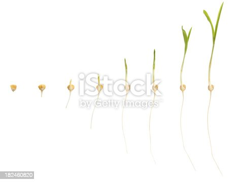 147512291 istock photo corn growing 182460820