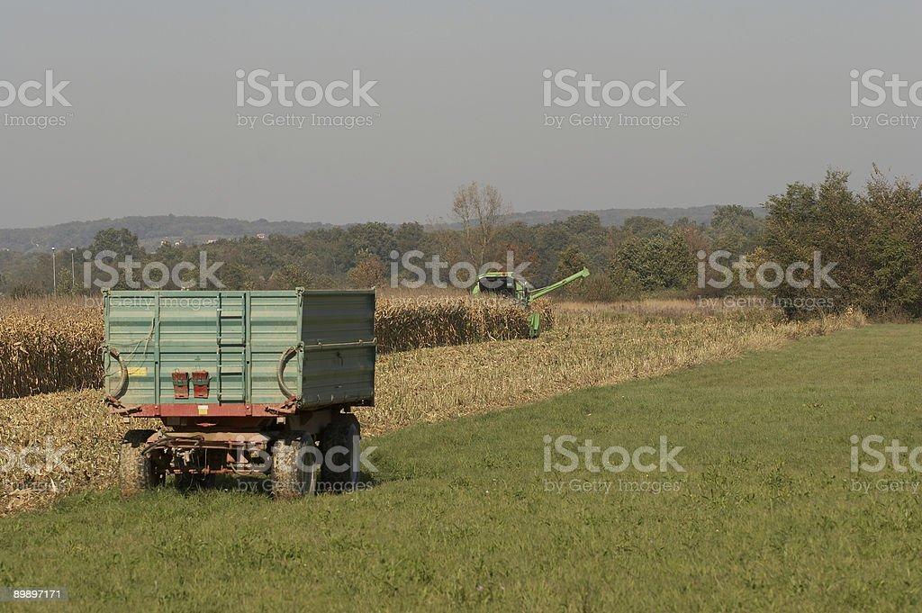 Кукурузный уборки Стоковые фото Стоковая фотография