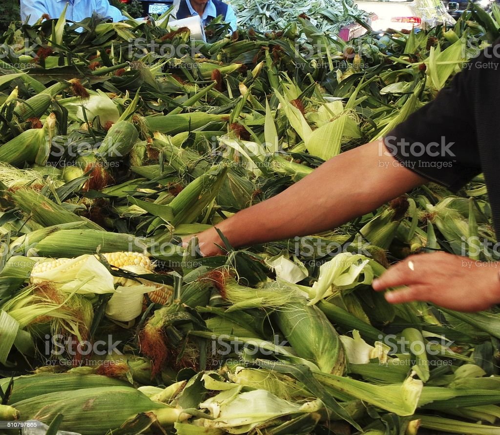 Corn husk wagon with arm reaching for a cob stock photo