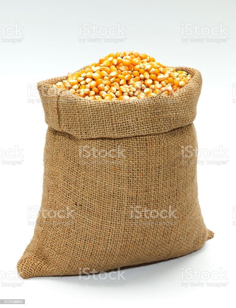 Corn in the Sack stock photo