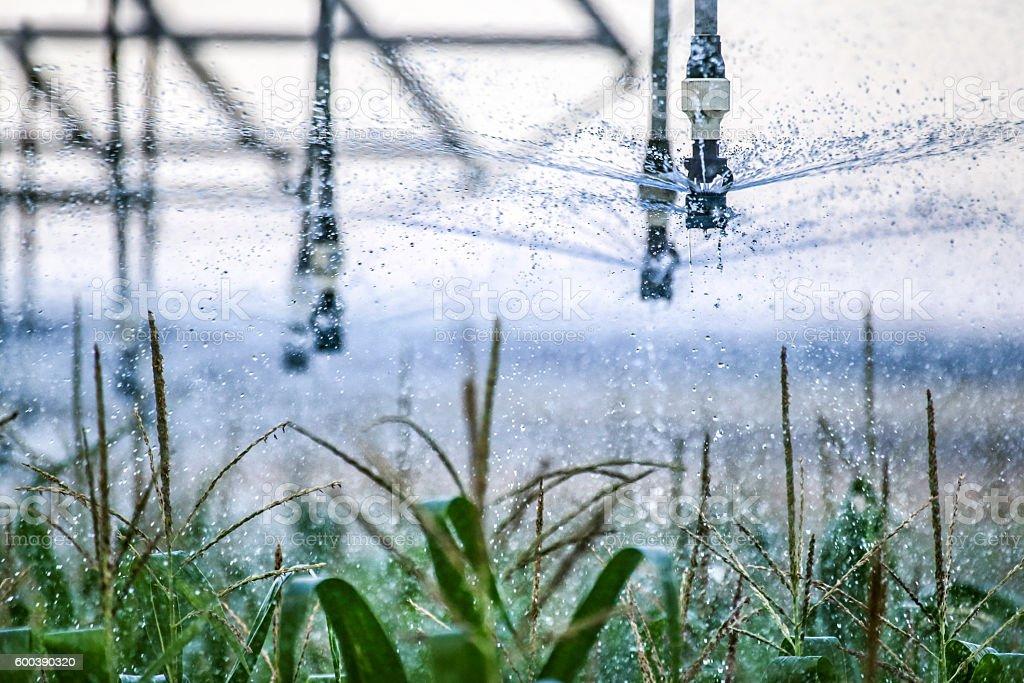 Corn irrigation stock photo