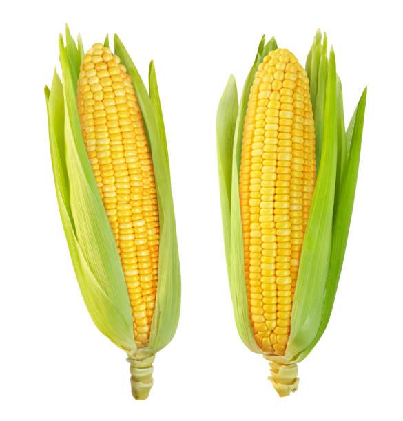 corn isolated on a white background - milho imagens e fotografias de stock