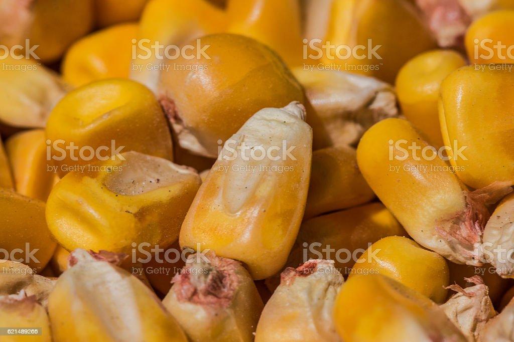 Corn kernel foto stock royalty-free