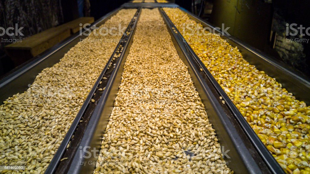 Corn, malted and unmalted barley stock photo