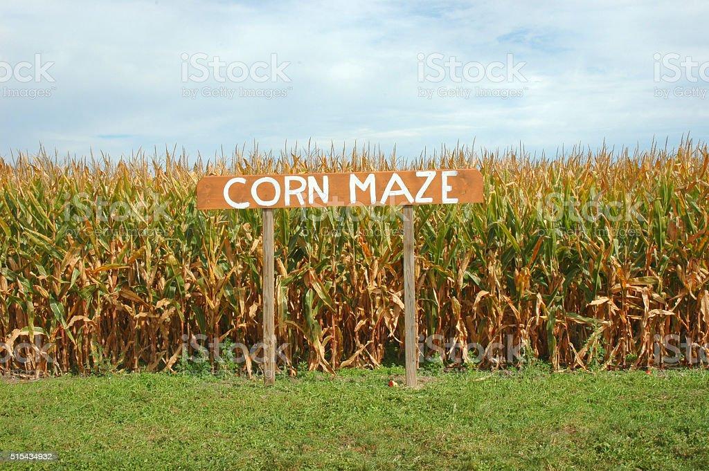 Corn Maze royalty-free stock photo