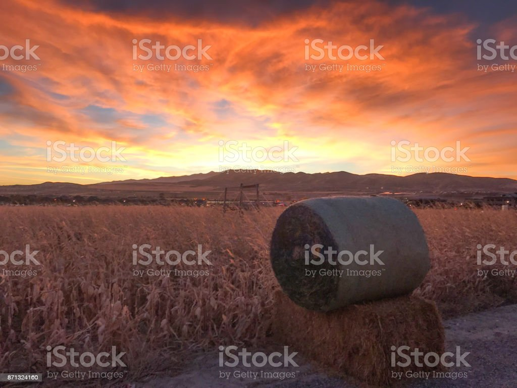 Corn Maze sunset stock photo