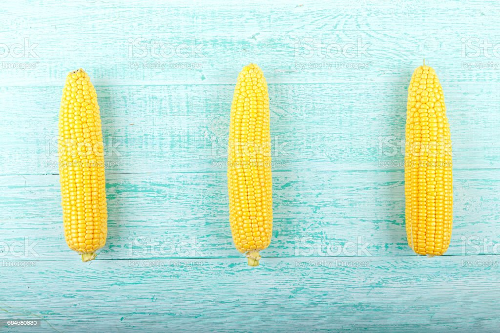 Corn on a blue background royalty-free stock photo
