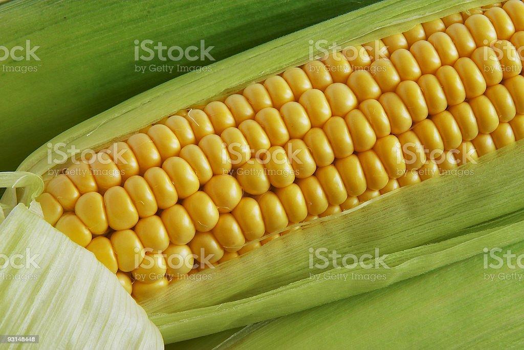 Corn on cob stock photo