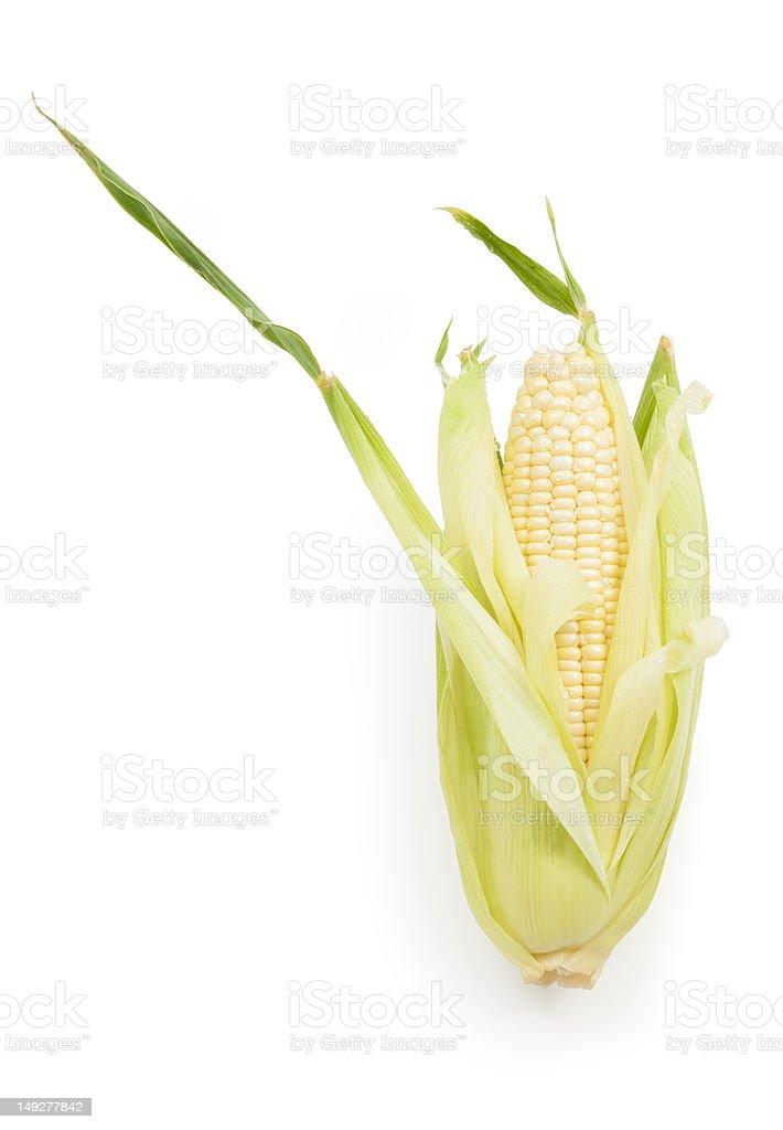 Corn on the Cob Isolated stock photo