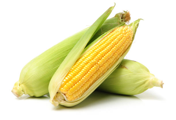 corn on the cob kernels peeled isolated on white background - milho imagens e fotografias de stock