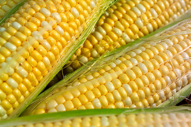 corn on the cob a closeup of corn on the cob sweetcorn stock pictures, royalty-free photos & images