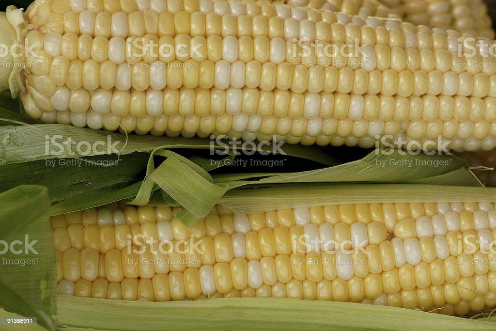 Corn on the cob royalty-free stock photo