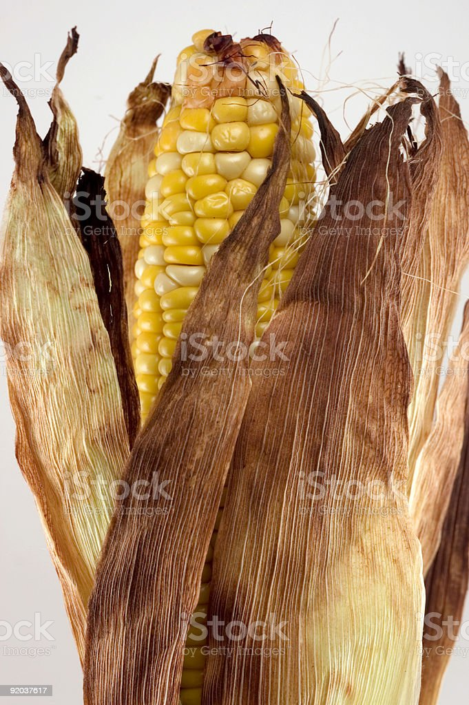 Corn on the Cob- Summertime Foods royalty-free stock photo