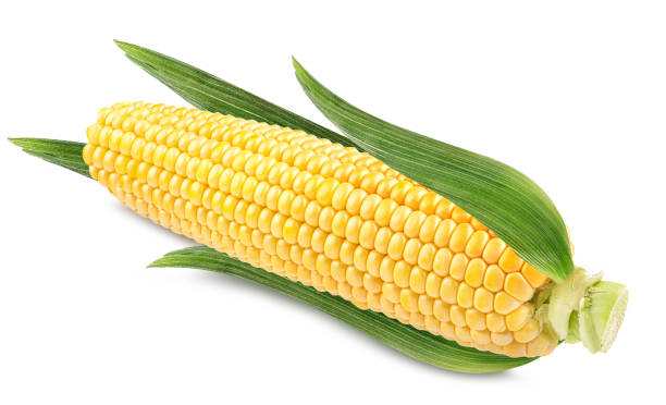 Corn on white background Corn isolated on white backgroundCorn isolated on white background sweetcorn stock pictures, royalty-free photos & images