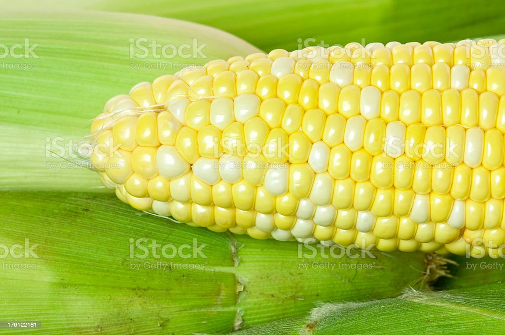 Corn royalty-free stock photo