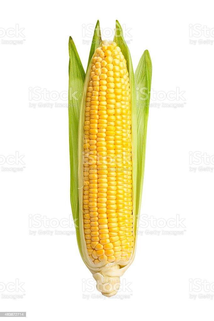 corn stock photo