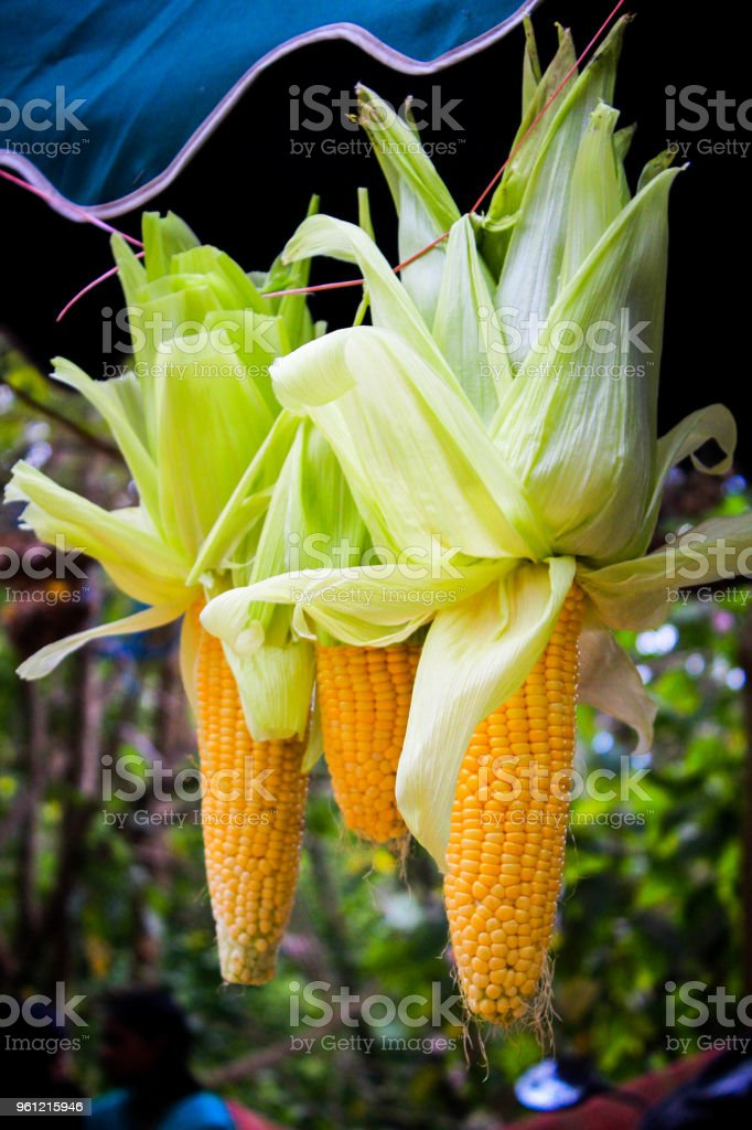 Corn – Foto