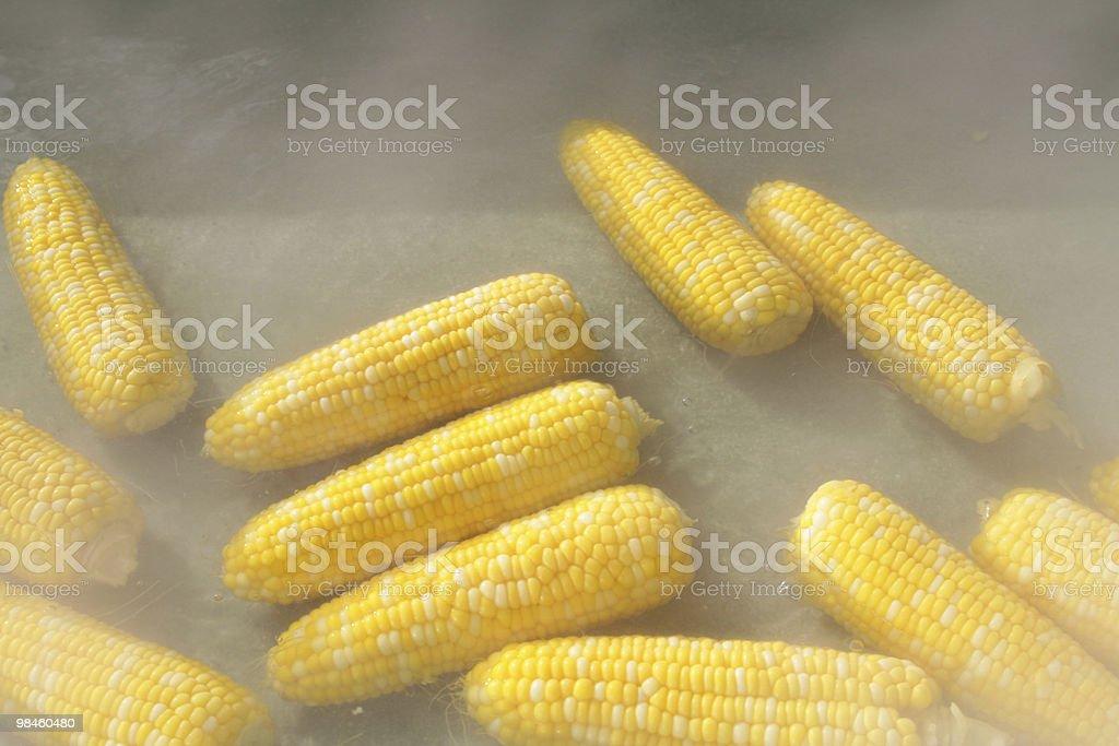 Corn royalty-free stock photo
