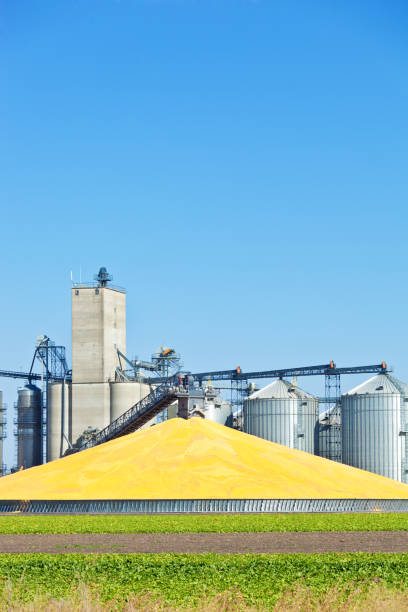 Corn Processing Plant and Silos During Harvest at Daytime A corn processing plant in the fall during harvest time. Corn is harvested, collected and processed. Stored at the silos and storage facility ready for shipping. agricultural cooperative stock pictures, royalty-free photos & images