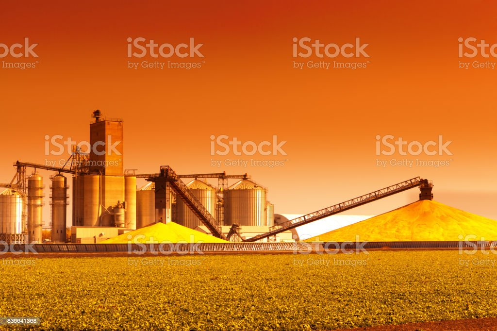 Corn Processing Plant and Silos During Harvest at Sunset stock photo