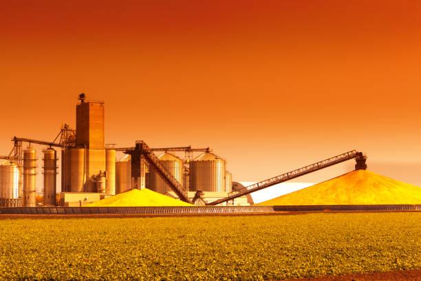 Maïs, Silos et l'usine de traitement au cours de la récolte au coucher du soleil - Photo