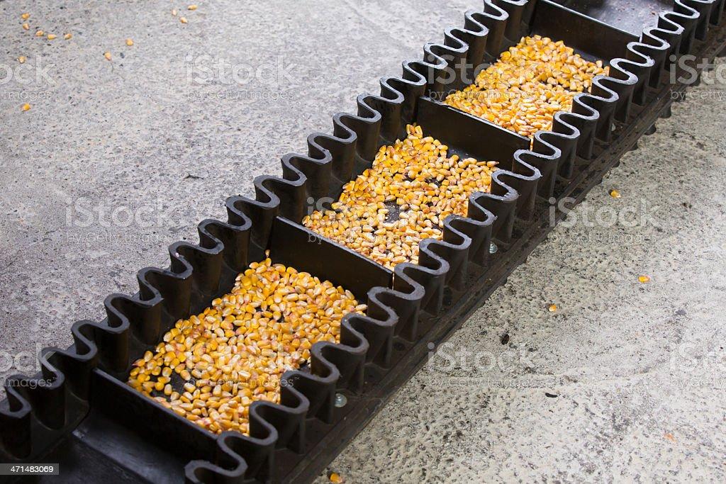 Corn production royalty-free stock photo