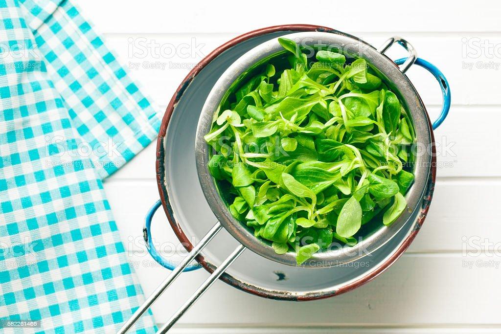 corn salad, lamb's lettuce in colander stock photo