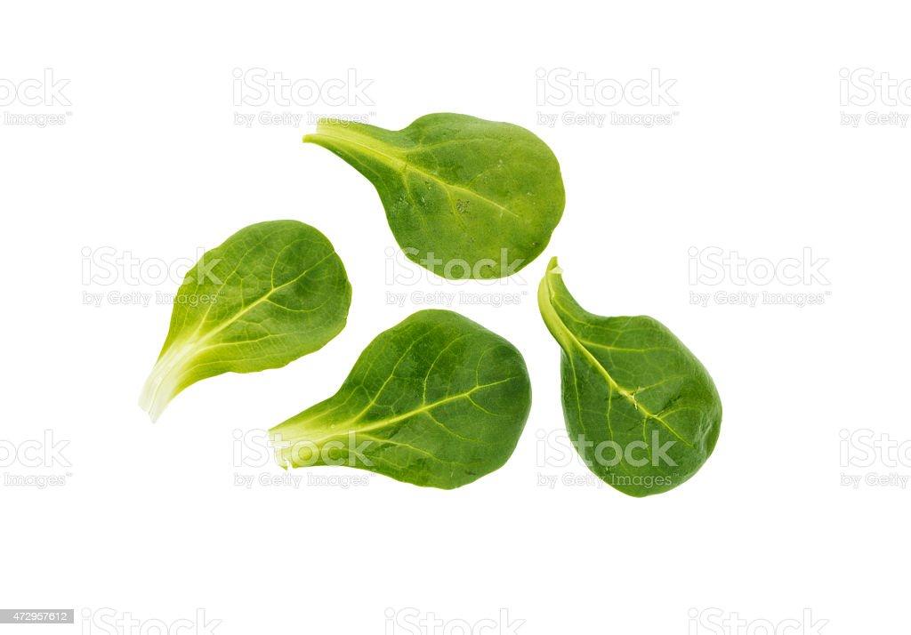 Corn salad, mache, rapunzel leaves isolated on white stock photo