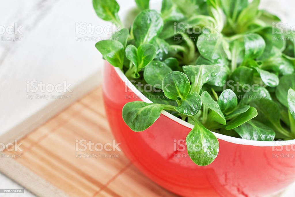 Corn salad plant stock photo