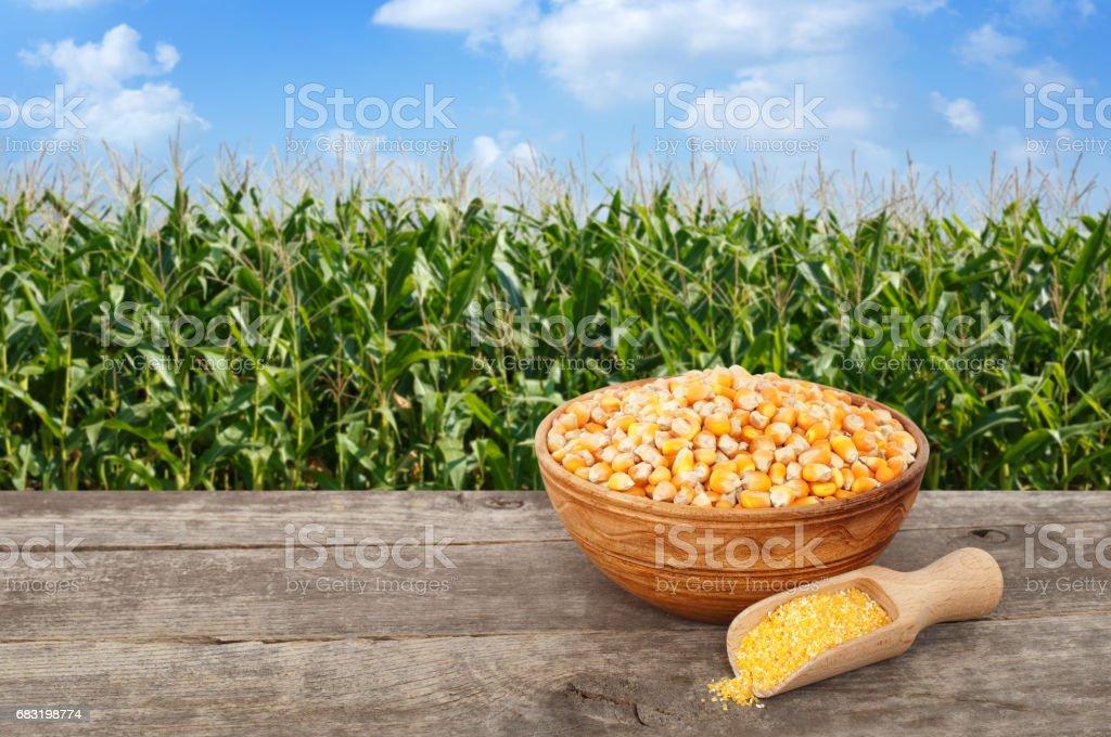 玉米種子和玉米麵粥 免版稅 stock photo