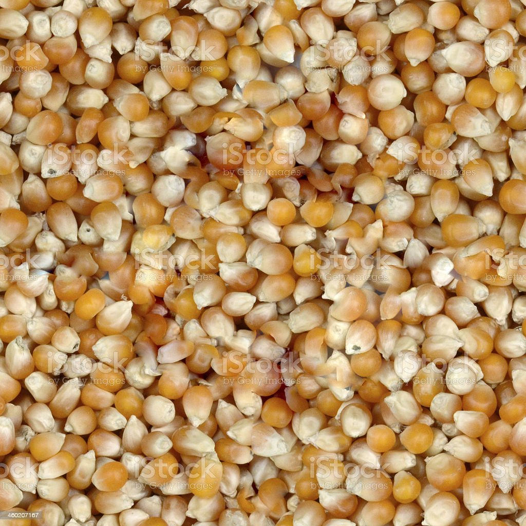 corn seeds - seamless pattern royalty-free stock photo