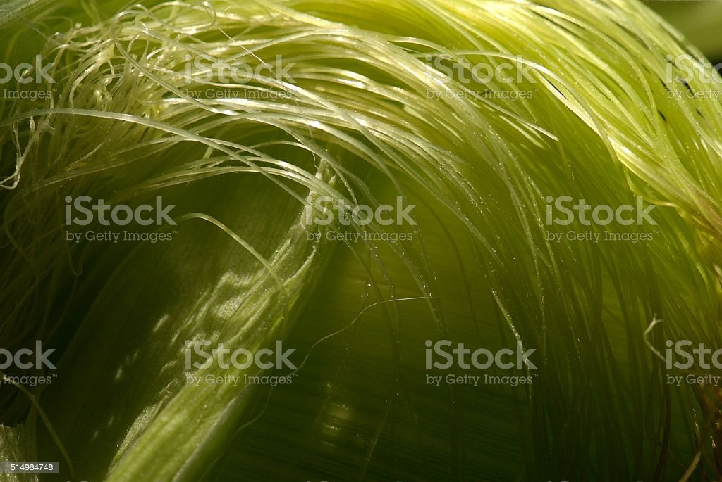 Corn silk swirl in the sun stock photo