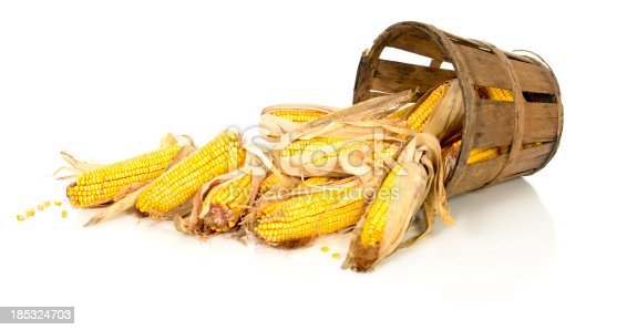 Corn cobs spill out of an old farm basket on 255 white.